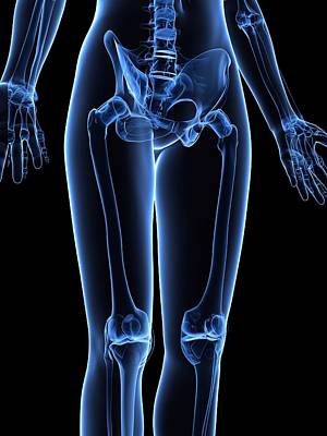 X-ray Image Digital Art - Leg Bones, Artwork by Sciepro