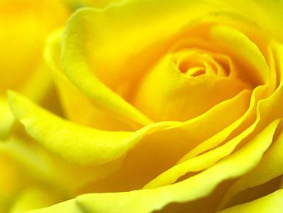 Lemon Yellow Rose Print by Kathy Yates