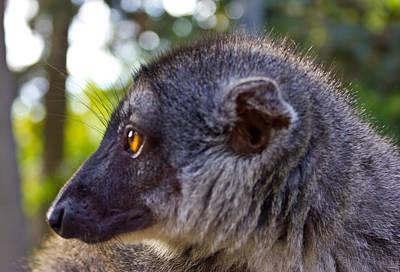 Animal Photograph - Lemur by Nadya Ost