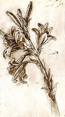 Pen And Ink Drawing Photograph - Leonardo Da Vinci's Lilies. by Sheila Terry