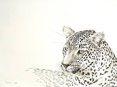 Painting - Leopard Resting by Vanessa Lomas
