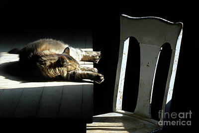 Catnap Photograph - Let Sleeping Cats Lie by Bob Christopher
