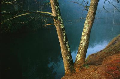 Dogwood Lake Photograph - Lichen-covered Dogwood Trees by Raymond Gehman