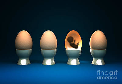 Life In Egg Print by Gualtiero Boffi
