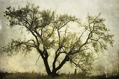 Likeable  Elm Print by JC Photography and Art