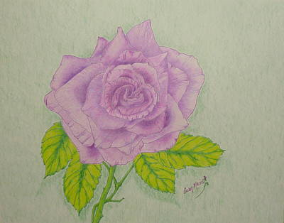 Lilac Drawing - Lilac Rose by Gwen Rose