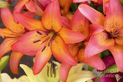 Lilies Background Print by Jane Rix
