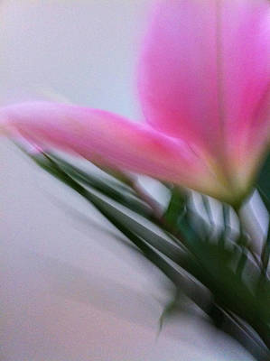 Lily In Motion Print by Kathy Corday