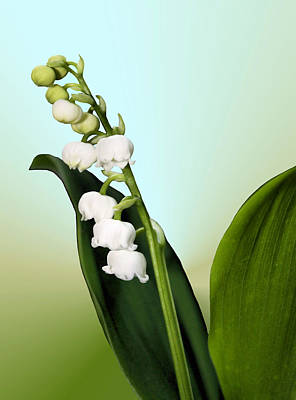 Lily Of The Valley Print by Kristin Elmquist