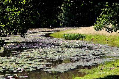 Lily Pad Lake 2 Print by Pauline Ross