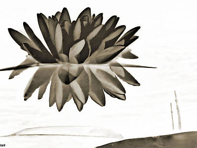 Waterlily Drawing - Lily Reflect by Debra     Vatalaro
