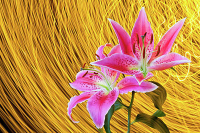 Stargazer Lilies Photograph - Lily With Light Trails by H Matthew Howarth [flatworldsedge]