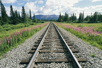 Lined On Either Side By Pink Fireweed Print by Rich Reid
