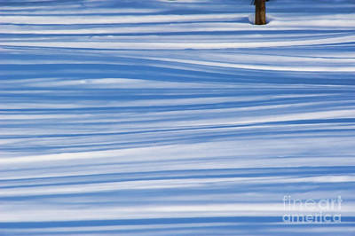 Photograph - Lines In The Snow by Andrea Kollo
