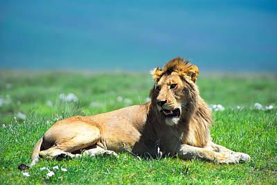 Lion King Print by Sebastian Musial
