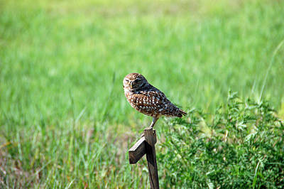 Owl Photograph - Little Owl by Aimee L Maher Photography and Art Visit ALMGallerydotcom