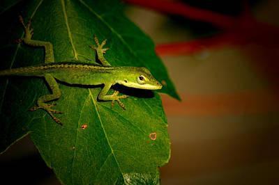 Photograph - Lizard Portrait by David Weeks