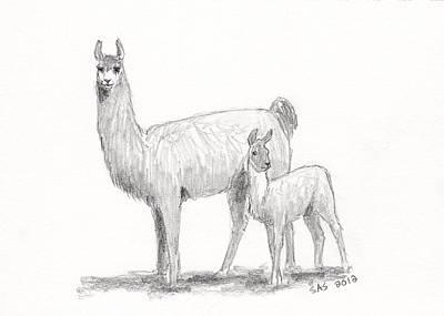 Llama Drawing - Llama And Cria by Sherri Strikwerda