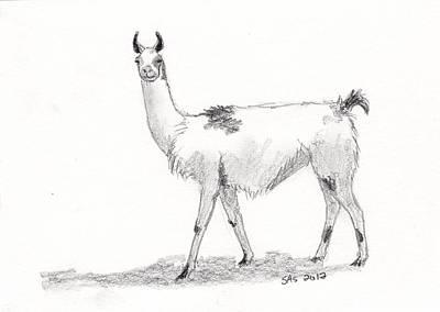 Llama Drawing - Llama by Sherri Strikwerda