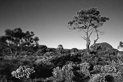Dream Photograph - Florida Brush With Pine Tree by Skip Nall