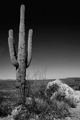 Monochrome Photograph - Lone Saguaro by Chad Dutson