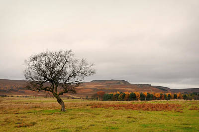 Lone Tree And Higger Tor Print by Siobhan Brennan-Raymond