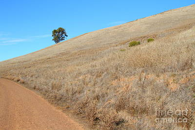 Lone Tree At End Of The Trail At Coyote Hills California . 7d10920 Print by Wingsdomain Art and Photography