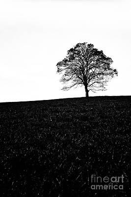 Lone Tree Black And White Silhouette Print by John Farnan
