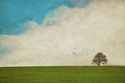 Flock Of Bird Photograph - Lone Tree by Image by J. Parsons