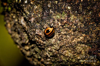 Lonely Beetle  Print by Venura Herath