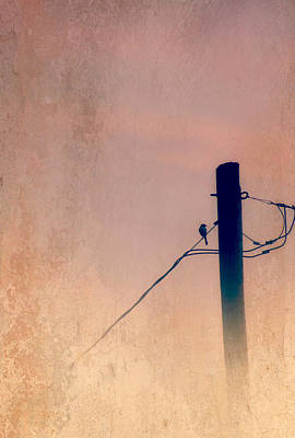 Mockingbird Digital Art - Lonely Soldier by Susan Bordelon