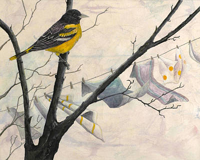 Oriole Mixed Media - Looking For Nesting Material by Sandy Clift