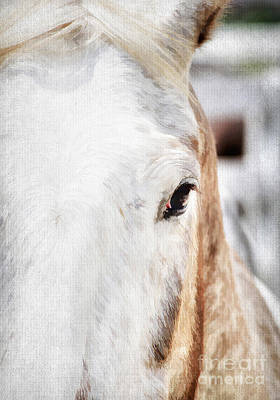 Kentucky Horse Park Photograph - Looking Into Her Soul by Darren Fisher