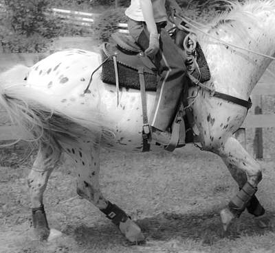 Horse Show Digital Art - Lope by Betsy Knapp