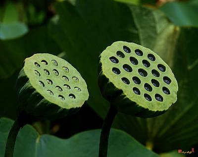 Lotus Capsules-sun Worshipers Dl052 Print by Gerry Gantt