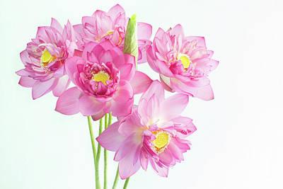 Hanoi Photograph - Lotus Flower by Nga Nguyen