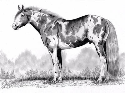Horse Drawing - Loud Paint Horse by Cheryl Poland
