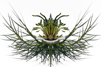 Love In A Mist Print by Jean Noren