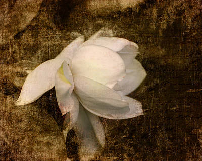 Antique Photograph - Love Letter Viii Cape Jasmine Gardenia by Jai Johnson
