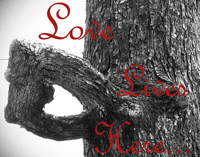In Focus Photograph - Love Lives Here by Lynn Davenport