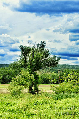 Deerfield Photograph - Lush Field by HD Connelly