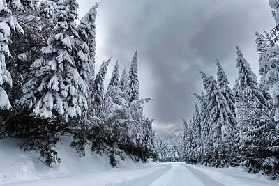 Magnificent Forest Print by Evgeni Dinev