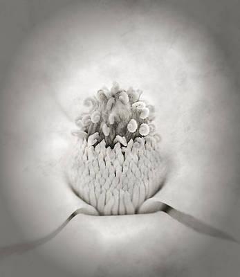 Magnolia 1 Print by Rich Franco
