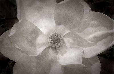 Magnolia 3 Print by Rich Franco