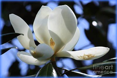 Magnolia In Blue Print by Carol Groenen