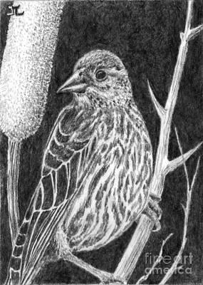 Blackbird Drawing - Male Red Winged Blackbird by James Leonard
