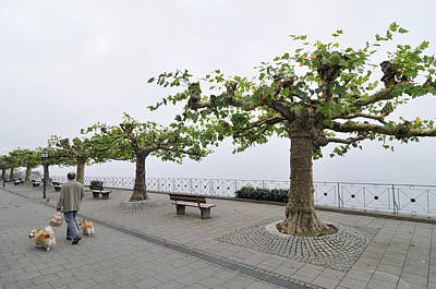 Man With Dog Walking On Empty Promenade With Trees Print by Matthias Hauser