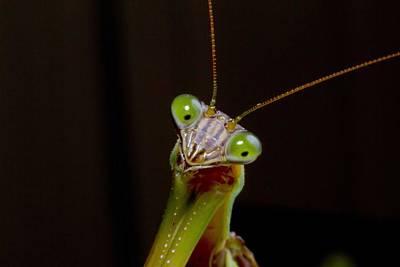 Photograph - Mantis Photo Bomb by Stephen EIS