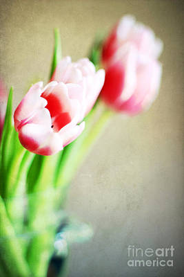 March Tulips Print by Darren Fisher