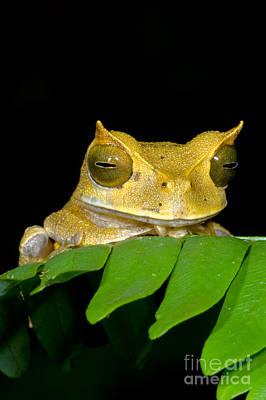 Marsupial Frog Print by Dante Fenolio
